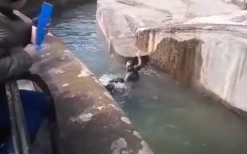 Kamery zachytily opilého mladíka, který přelezl ohradu v zoo. Lekl se medvědice a snažil se ji utopit.