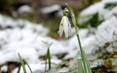 Prichádza jar? Na niektorých častiach Slovenska sa oteplí až na 13 stupňov Celzia.