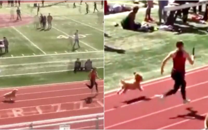Pes sa zatúlal na bežecké preteky a takmer prekonal svetový rekord Usaina Bolta. Video sa stalo hitom internetu.