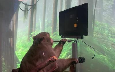 Makak Elona Muska ovláda videohru myšlienkami. Ide o ďalší úspech vo vývoji mozgového čipu Neuralink.