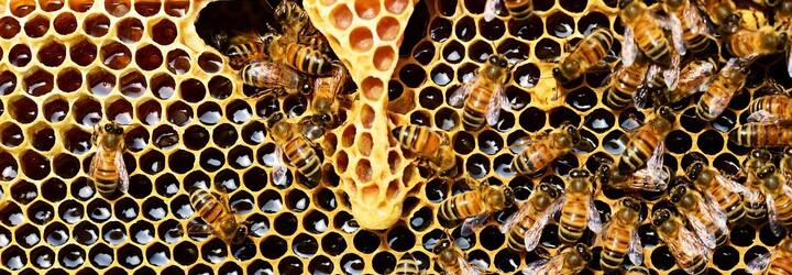 Bratislava má svoj prvý včelí hotel. Nájdeš ho na streche hotela