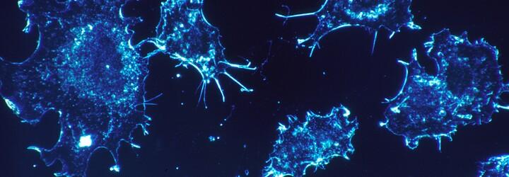 Čeští vědci s Američany vyvíjí látku, která by mohla ničit nádorové buňky. Získali k tomu investici ve výši 40 milionů dolarů