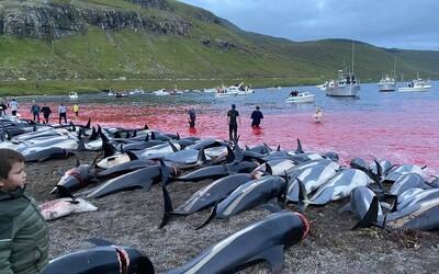 Na Faerských ostrovoch na smrť dobodali 1 428 delfínov v plytkej vode. Hrozivá tradícia znovu vyvolala vlnu kritiky.
