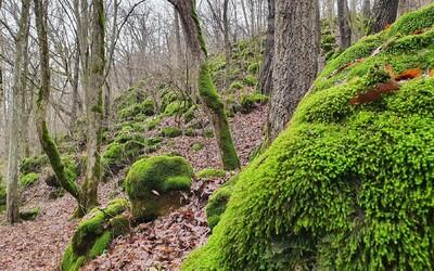 Prírodné dedičstvo sa rozrastá. UNESCO rozšírilo územie slovenských pralesov na Zozname kultúrneho dedičstva.