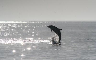 1 500 mrtvých delfínů a moře zalité krví. Faerské ostrovy zahájily tradiční lov, proti kterému protestují lidé po celém světě