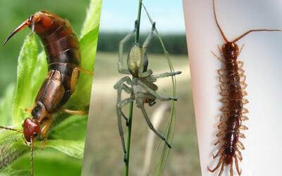 10 najnechutnejších drobných živočíchov, ktoré môžeš nájsť na Slovensku. Nechýba mnohonožka, strehúň ani ucholak
