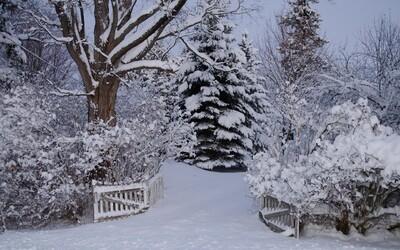 Blíži sa vlna sneženia. V najbližších hodinách napadne na Slovensku miestami až 20 centimetrov.