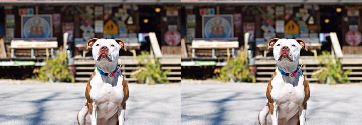 Americké městečko si už počtvrté zvolilo za starostu psa. Fenka Brynneth Pawltro vede politiku plnou lásky, tolerance a míru