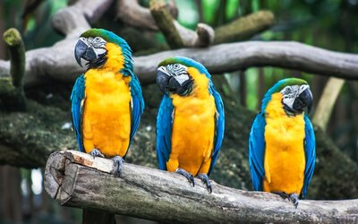Zoologická zahrada musela odstranit z expozice své papoušky. Byli příliš vulgární.