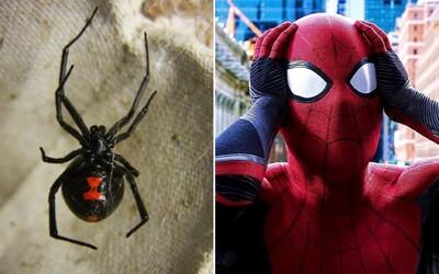 Osmiletý chlapec a jeho bratři chtěli schopnosti Spider-Mana. Nechali se pokousat černou vdovou.