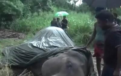 18-ročný slon zahynul po tom, čo musel v horúčavách niesť skupiny turistov. Zomrel na vyčerpanie