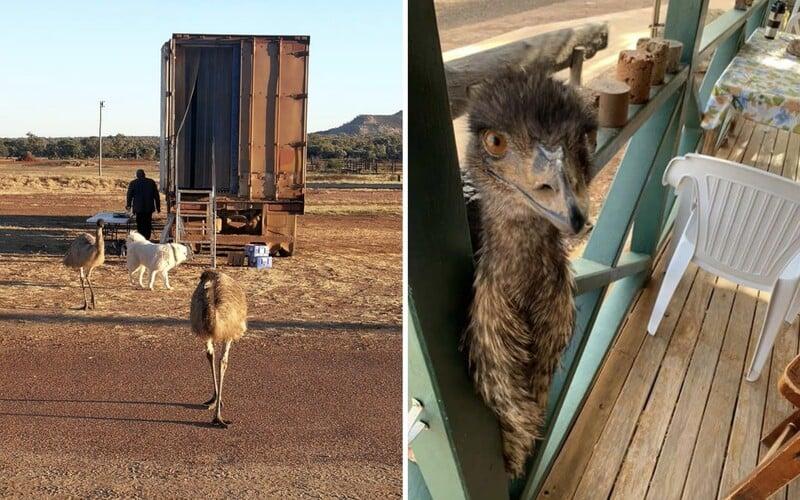 Dvoumetroví ptáci emu začali pít hostům kávu a jíst sendviče. Hotel, kde pobývali, je musel po letech vyhodit.