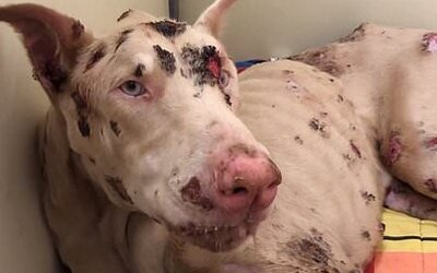 2-ročný psík jedol od hladu kamene, po piatich dňoch v opatere zomrel. Majiteľa odsúdili za týranie zvierat