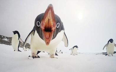 20 fotografií roka podľa National Geographic. Dominovali roztomilé zvieratká, ale aj momentky z prírody