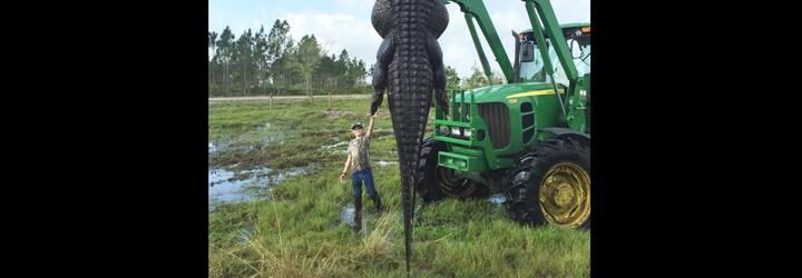 Farmáři zabili více než 350kilového a 4 a půl metru dlouhého aligátora pár metrů od jejich statku