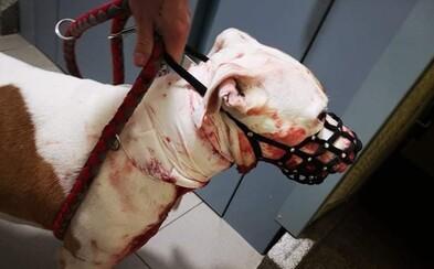 23-ročný Marek podrezal svojho psa. Na krku mal 20-centimetrové poranenie