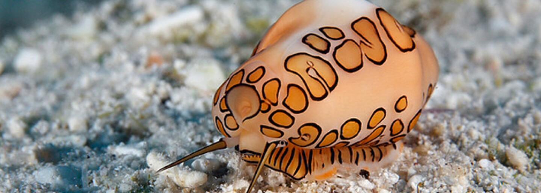 24 mořských živočichů, které neuvidíte ani ve sci-fi filmu