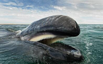 25 let věnoval delfínům a velrybám: Brit na fotografiích zachytává jejich dechberoucí majestátnost