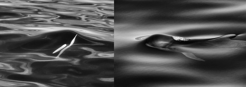 25 rokov venoval delfínom a veľrybám: Brit na fotografiách zachytáva ich dychvyrážajúcu majestátnosť