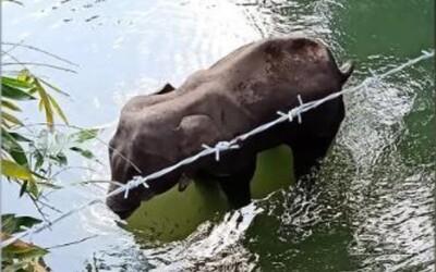 Březí slonice kousla do ovoce, ve kterém byla výbušnina. Následkům zranění podlehla.