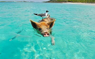 Majetná rodina nabízí mzdu 2,7 milionu korun ročně dvojici, která se jí bude starat o soukromý ostrov na Bahamách.