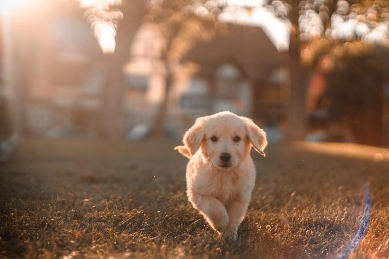 Tepelne upravené hydinové kosti môžu byť pre psa nebezpečné.