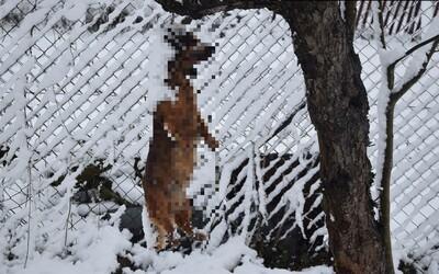 Zlodej v Nižnom Hrušove chladnokrvne zabil psa, hrozí mu 5 rokov vo väzení.