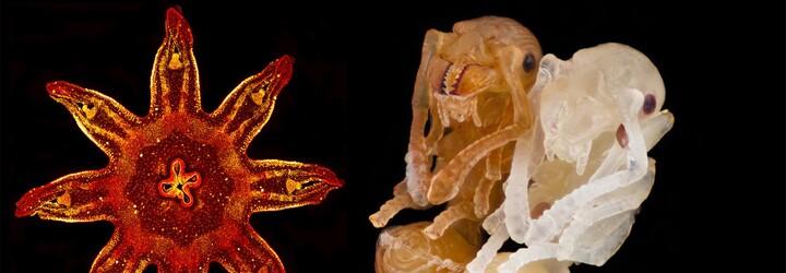 Očarujúce mikroskopické fotografie hýriace rôznymi farbami a odtieňmi vám predstavia svet, ktorý očami nevidíme