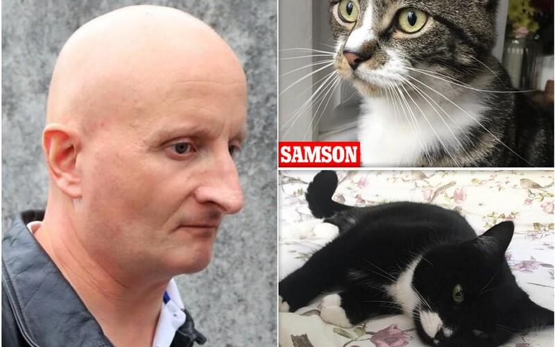 Muž z Británie dobodal šestnásť mačiek, deväť z nich neprežilo. Odsúdili ho na päť rokov väzenia.
