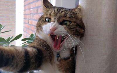 Na piloty letadla zaútočila agresivní kočka. Let museli přeložit na další den.