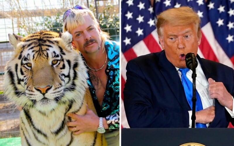 Kráľ tigrov Joe Exotic si pred väznicu zavolal limuzínu. Čaká, že mu Donald Trump udelí milosť pred odchodom z úradu.