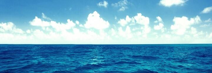 Neuvěřitelný moment, kdy obrovský žralok téměř spolkl celého tuleně. Příroda umí být občas skutečně nemilosrdná