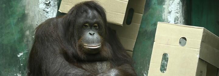 Zoologické zahrady od státu dostanou 80 milionů na krmení pro zvířata