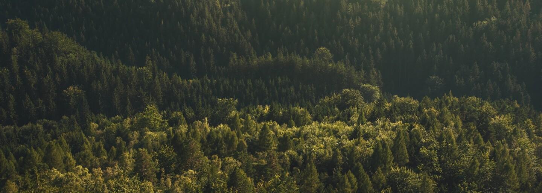 60 000 čínskych vojakov vysadí lesy o rozlohe Rakúska. Krajina sa rozhodla bojovať proti silnému znečisteniu