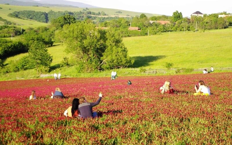 Čeští zemědělci se bouří kvůli lidem, kteří si v jetelových polích dělají ve velkém selfies. Ničí jim jejich úrodu.