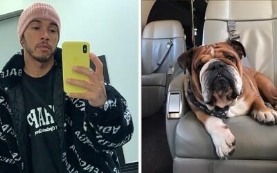 Pes Lewise Hamiltona je prý šťastným veganem. Podle závodníka má zvíře méně zdravotních potíží a dokonce přestalo kulhat.