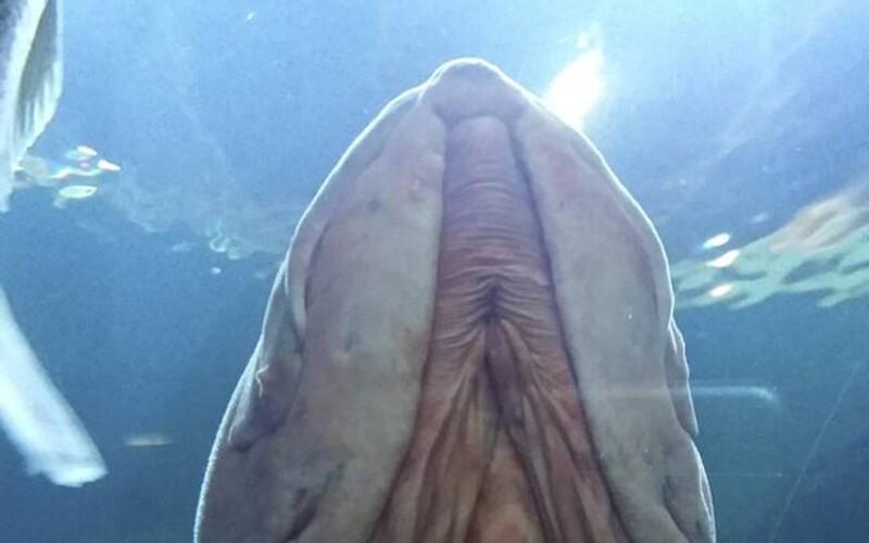 Ryba lidem připomíná pohlavní úd. Fotografie Američanky zaujala množství pozorovatelů.