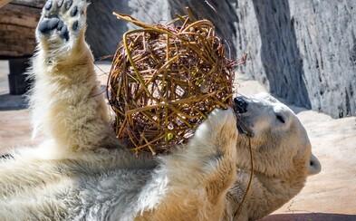 716 318 korun za šest dnů. Příznivci pražské zoo přispívají na chov zvířat a pomáhají v těžkých časech