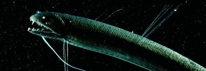 Co všechno ukrývá temné mořské dno? Od strašidelných živočichů až po gigantický tlak trhající těla na kusy