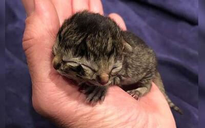 V USA se narodilo kotě, které má 2 tváře. Unikátní zvíře dokáže jedněmi ústy jíst a současně druhými mňoukat.