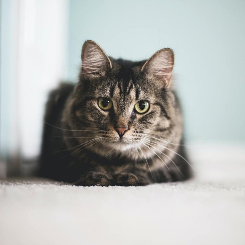 Mačka sa dokáže dostať cez každý otvor, cez ktorý prepchá hlavu.