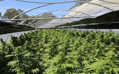 Policie zabavila marihuanu za téměř 25 milionů eur. Jde o jeden z největších úlovků v historii Austrálie.