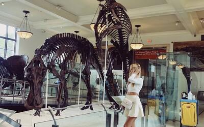 Obrovská kostra Tyrannosaura Rexa môže byť tvoja za 6 miliónov dolárov.