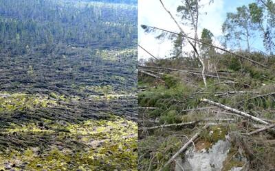 Keď vietor zmietol tatranské lesy alebo najhoršia prírodná katastrofa moderného Slovenska