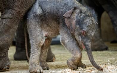 Adoptuj si mláďata, která přišla během karantény na svět, vyzývá Zoo Praha