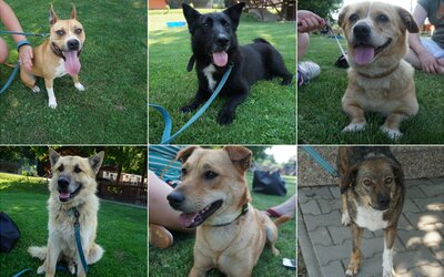 Adoptuj si psíka z útulku aj ty. Navštívili sme ten bratislavský, aby sme ti ukázali krásavcov, ktorí tam čakajú na lásku