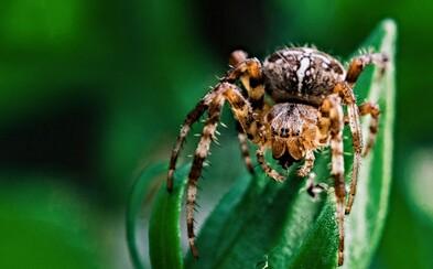 Pokud máš zelené oblečení, pavouk si tě najde snadněji