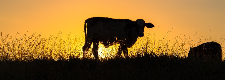 Aké zvieratá sú v Austrálii najväčšími zabijakmi? Možno budeš prekvapený, že nejde o tie, ktorých sa najviac bojíme