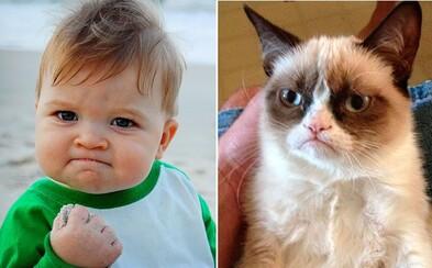 Ako dnes vyzerá Grumpy Cat či psycho priateľka? Pozri si, ako sa zmenili populárne postavičky meme obrázkov