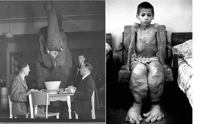 Ako ľudia oslavovali koniec II. svetovej vojny a prečo by niekto pil čaj so slonom? Fotografom sa podarilo zachytiť unikátne momenty dejín